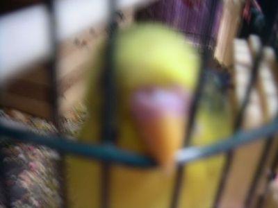 Purinnoboru