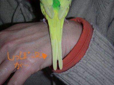 Purinnosippofutamata