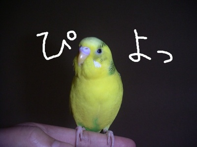 Purinpiyo2