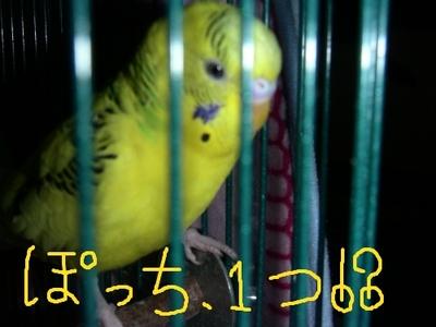 Purinpotti5