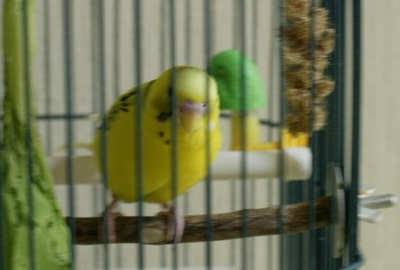Purin080723cage_2