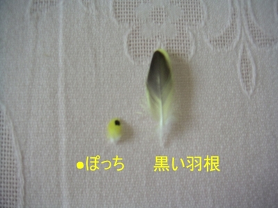 Purinnukehane008