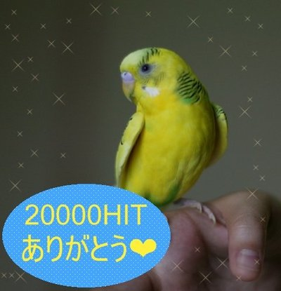 Purin20000hit