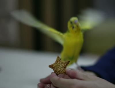 Purininkocookie03