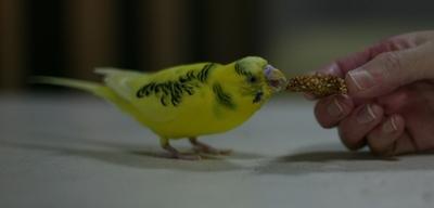 Purininkocookie16