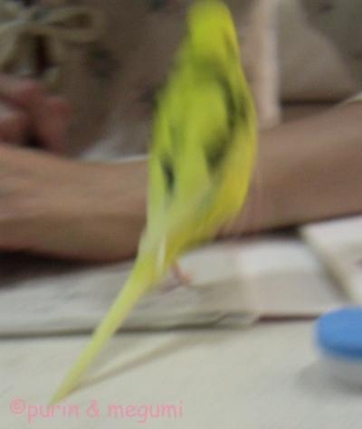 Purinhashiru