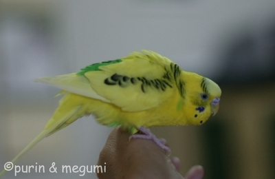 Purin4efw0975