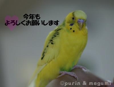 Purin4efw1030