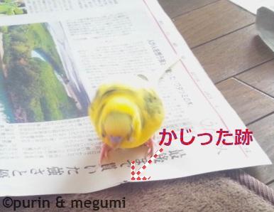 Purinshinbun03