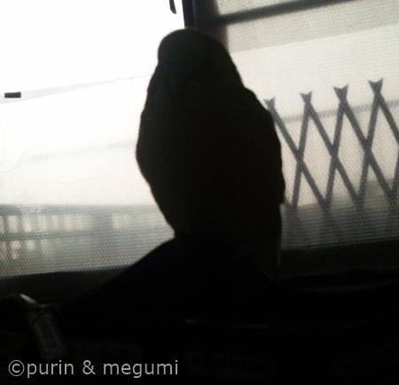 Purintofudebako02