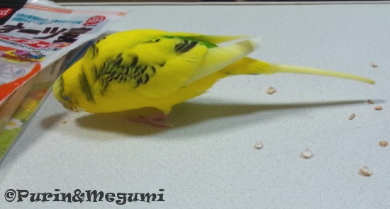 Purinotsumugi02