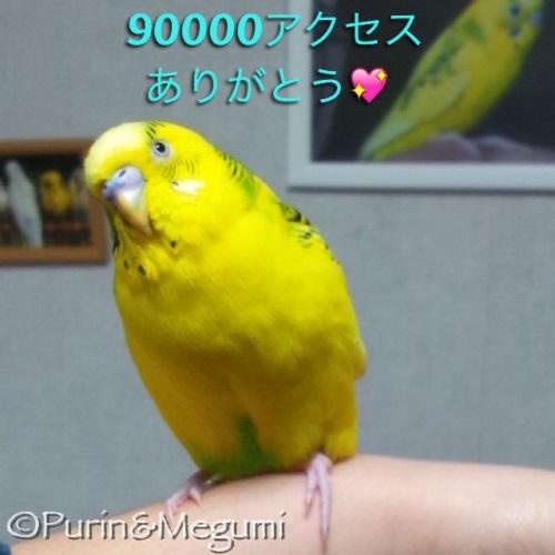 Purin90000access